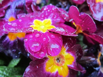 flowers-1355665_640