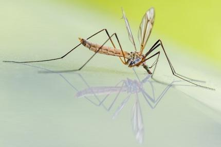 mosquito-1754359_640