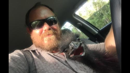 emu laughing