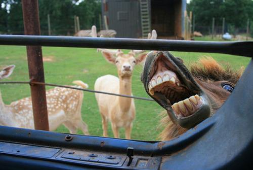 horse laugh2
