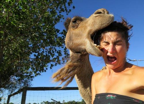 hungry giraffe