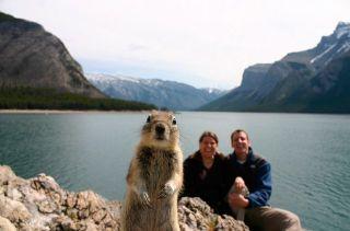 nosy squirrel