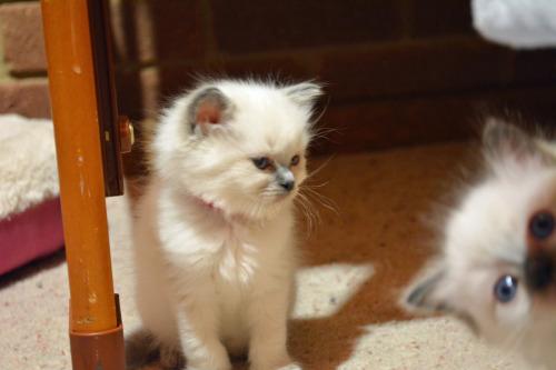 peek a boo kitty