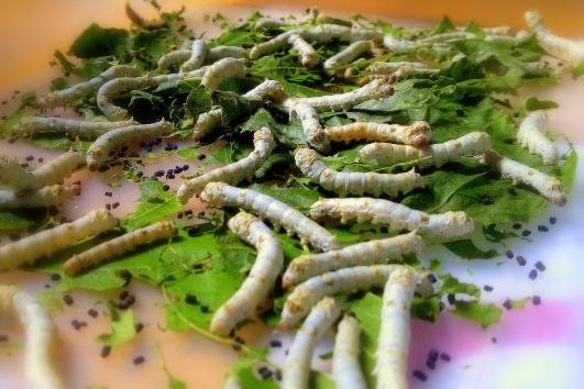 silkworm-109059_1280