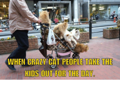 en-crazy-cat-people-take-the-kids-out-for-the-20352348