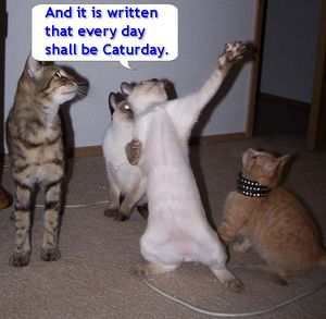 300px-The_Great_Prophecy_of_Caturday