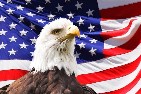 eagle-219679_960_720