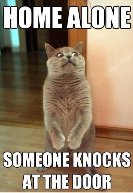 Home-alone-funny-cat-meme