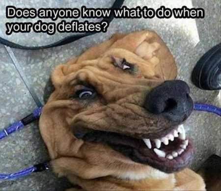 The-Best-Funny-Animal-Pictures-Ever-4010