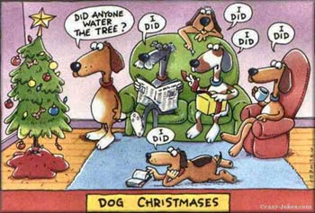 funny-dog-xmas-pics02