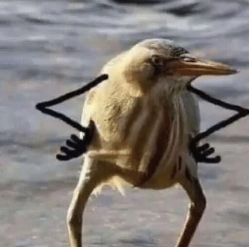 funny-bird-birb-meme-giggles-53559748