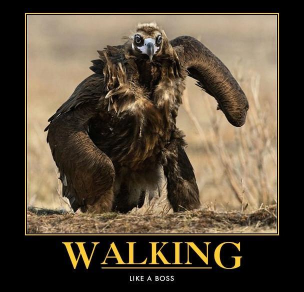 funny-bird-walking