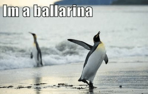 im-a-ballarina-justcapshune-com-funny-pictures-funny-bird-pictures-with-50661558
