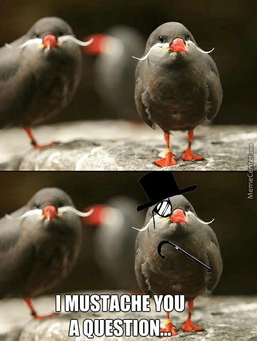 imustache-you-a-question-memecenter-com-feel-bird-memes-best-collection-52704934