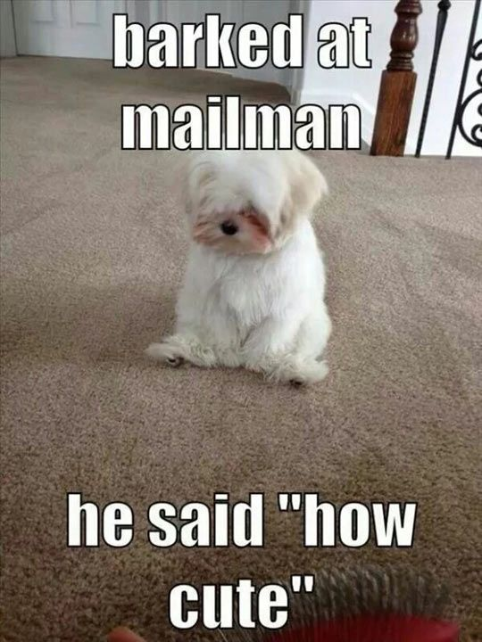 little-puppy-regrets-meme