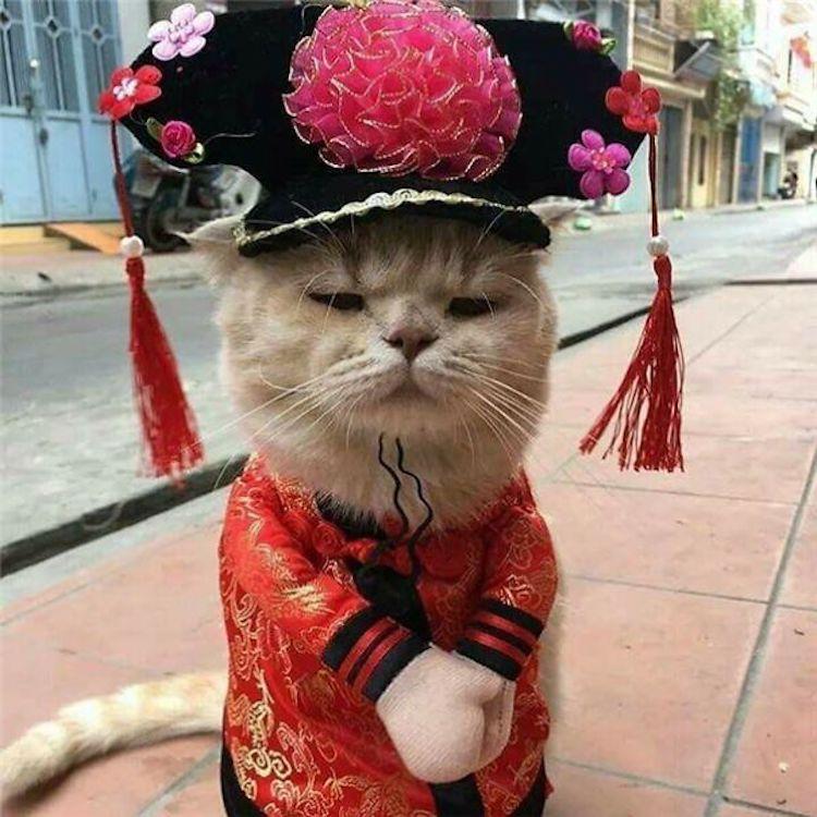 cat-fish-monger-8