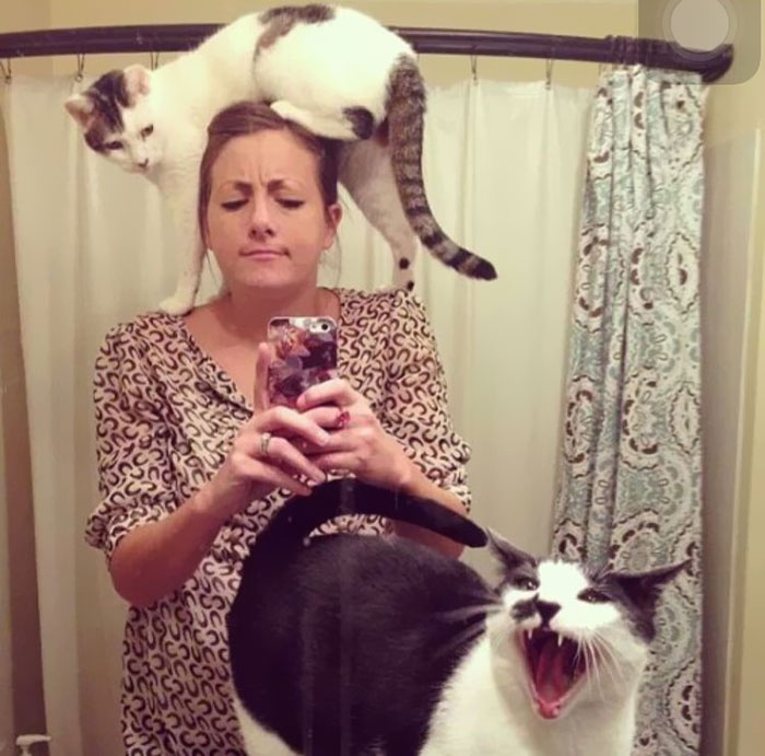 funny-cats-being-jerks-43-5ac4e80124df3__700