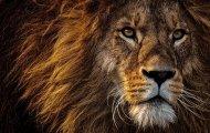 lion-3576045_960_720
